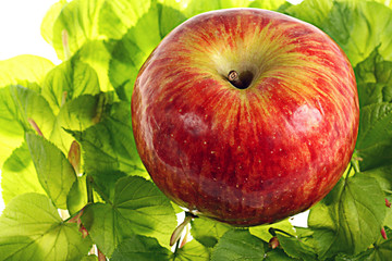 red apple on green leaves