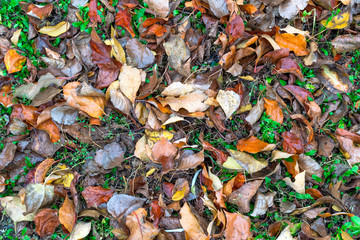 Background from dry leaves and grass