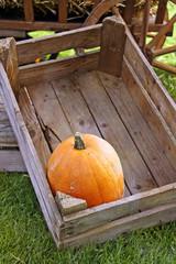 pumpkin in holzkiste