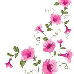 Bindweed flower on paper.