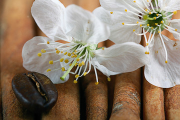covenants cherry fragrance perfume