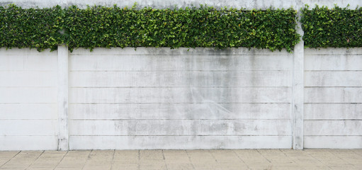 Cement wall and green leaf for background