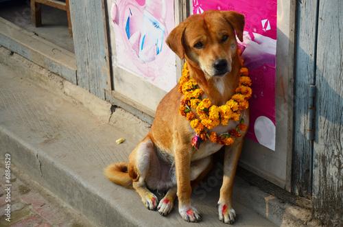 Tuinposter Nepal Kukur Tihar (worship of dog) in Tihar Deepawali festival