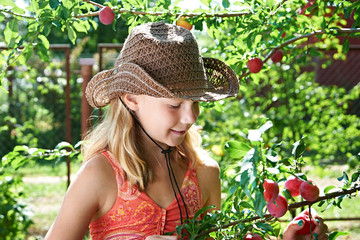 Girl in hat harvests plums
