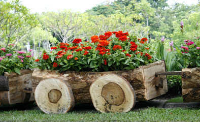 Flowers in pots in wooden box on background of garden