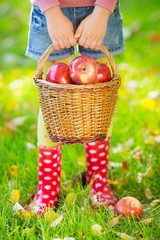 Kid holding basket with apples