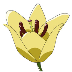 cartoon color vector flower lily yellow