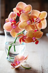 Beautiful Orchids flowers in a glass vase.