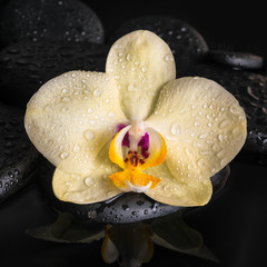 Beautiful spa concept  of yellow orchid (phalaenopsis), zen ston