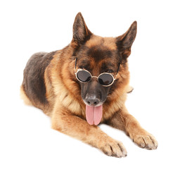 Funny cute dog in glasses isolated on white