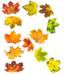 Letter R composed of autumn maple leafs