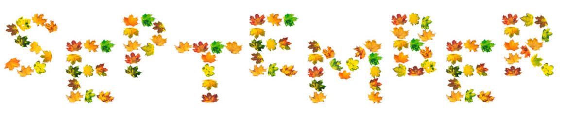 S E P T E M B E R text composed of autumn maple leafs