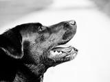 black dog (85)