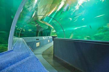 Aquarium underwater tunnel
