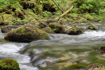 Ufer vom Gebirgsbach