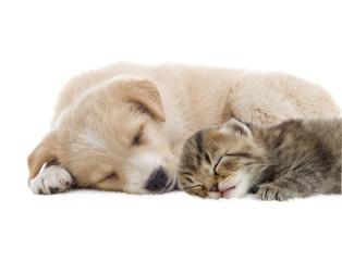 beige puppy and kitten