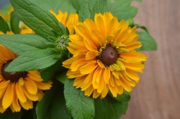 Sommerblumengruß gelb braun