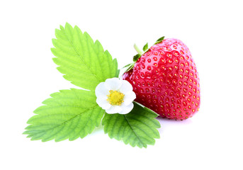 Strawberry with a flower and foliage.