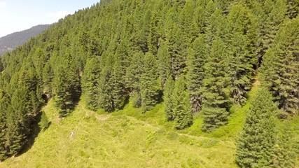 Flight over a Highland Forrest - Aerial Flight