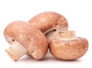 Brown champignon mushroom
