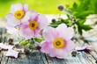 canvas print picture - Herbst-Anemonen