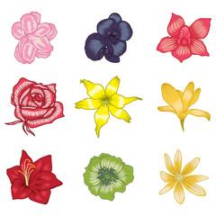 vector illustration of flower set