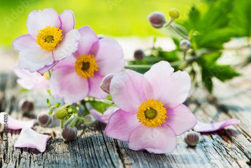 canvas print picture Herbst-Anemonen