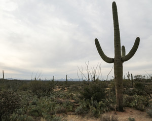 Arizona's Saguaro National Park East