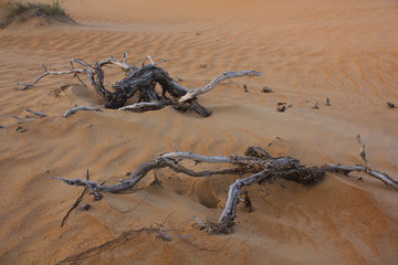 Branches in the desert