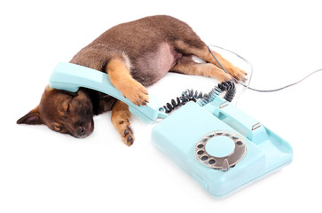 Sleeping puppy and blue phone isolated on white