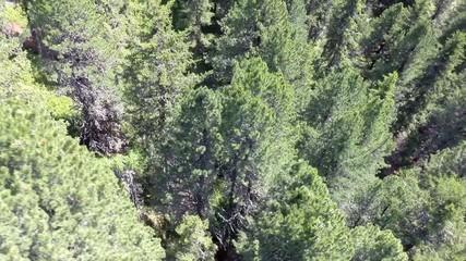 Flying over Trees - Aerial Flight