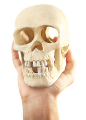 Human skull in hand isolated on white