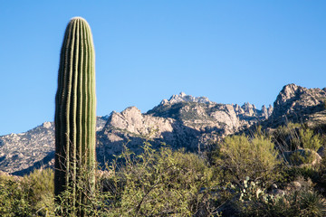 Arizona's Catalina State Park