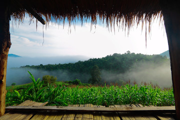 View from porch of bamboo hut on early morning