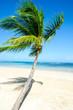 Einsamer Karibischer Traumstrand mit Palme :)