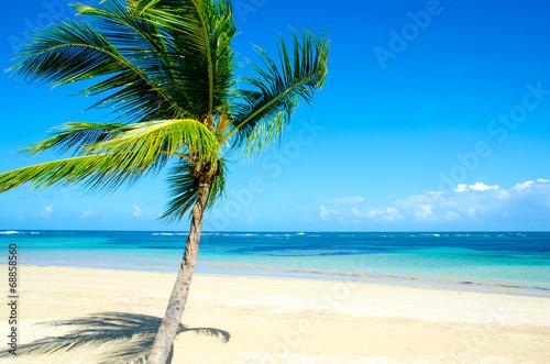 Einsamkeit: Karibischer Traumstrand :)|68858560