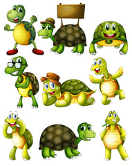 Turtle  actions