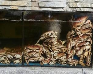 Seafood restaurant in Chinatown, Manhattan