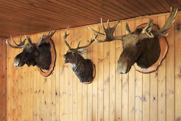 Stuffed moose head and deer head.