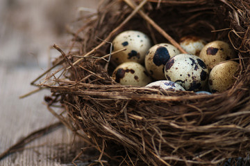 Quails eggs in a nest on the wooden background