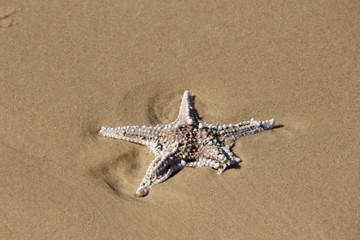 stella marina 3