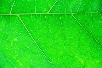 Green leaf background texture, macro