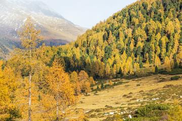 Autumn alp landscape