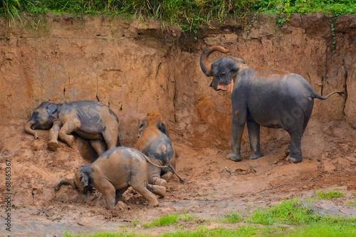Papiers peints Autre bain de boue troupeau d'éléphants sri lanka pinnawala