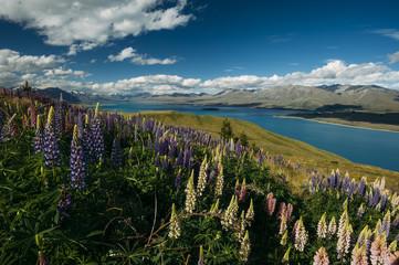View from the top of Mount John near Lake Tekapo.