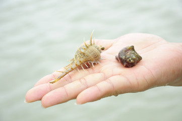hermit crab on hand