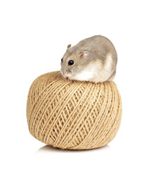 Dwarf Hamster sat on a Ball of String