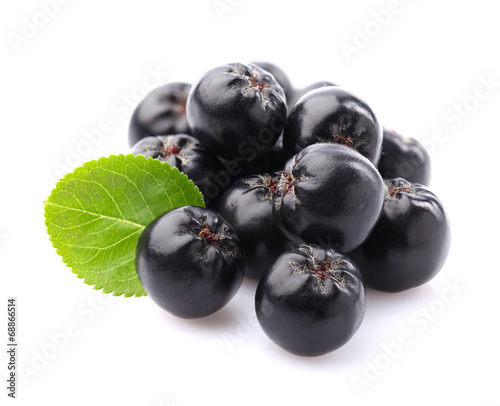 Chokeberry with leaf - 68866514