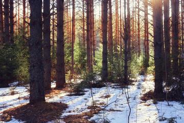 spring forest landscape