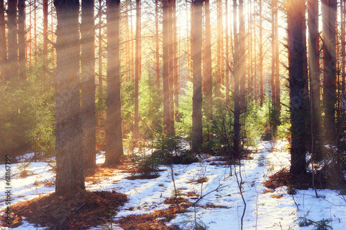 snow in the forest - 68867790